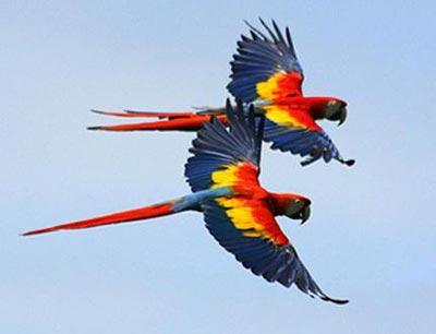 avistar aves de mexico