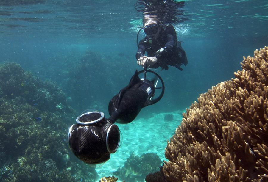 Explorando virtualmente arrecifes coral