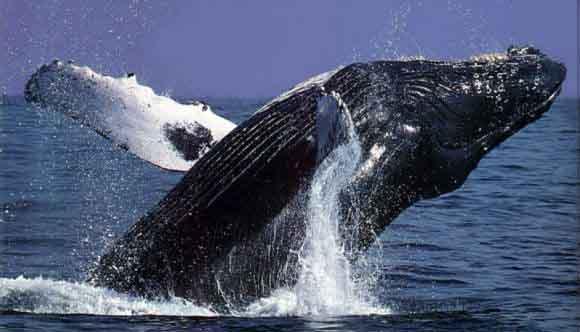 avistar ballenas México