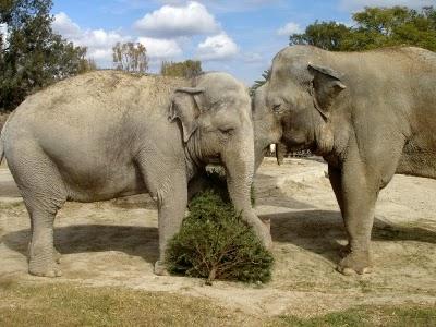 africam safari parque zoológico puebla
