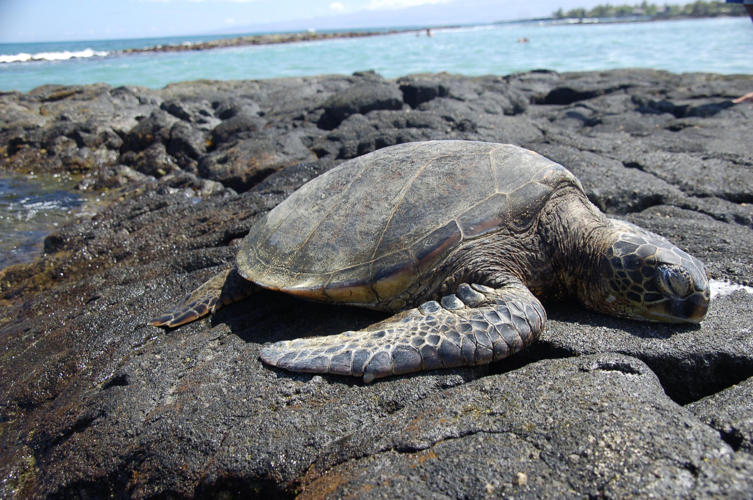 Liberacion tortugas Mexico