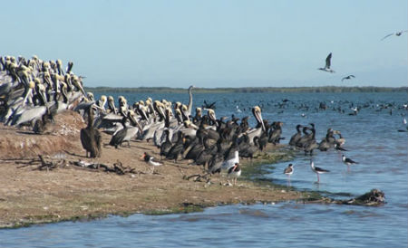 bird_island_las_glorias