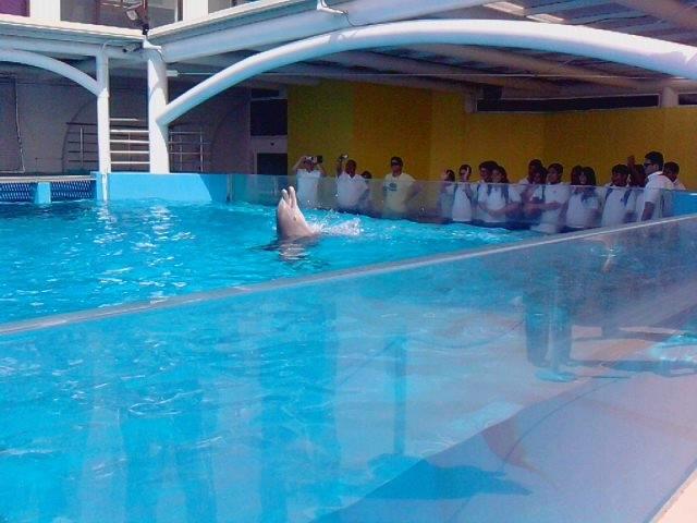 Delfinario del Acuario de Veracruz