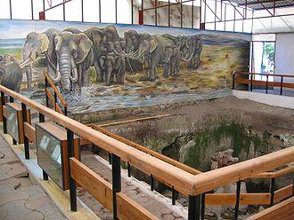 330px-Museo_paleontologico_de_Tocuila-interiores2
