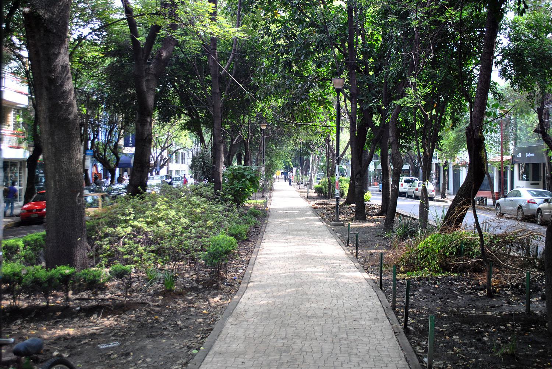 Avenida_Amsterdam_-_Colonia_Condesa_2