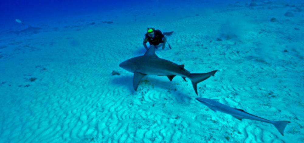 Bull_Shark_Playa_del_Carmen_Dive_Cenotes_Mexico_101