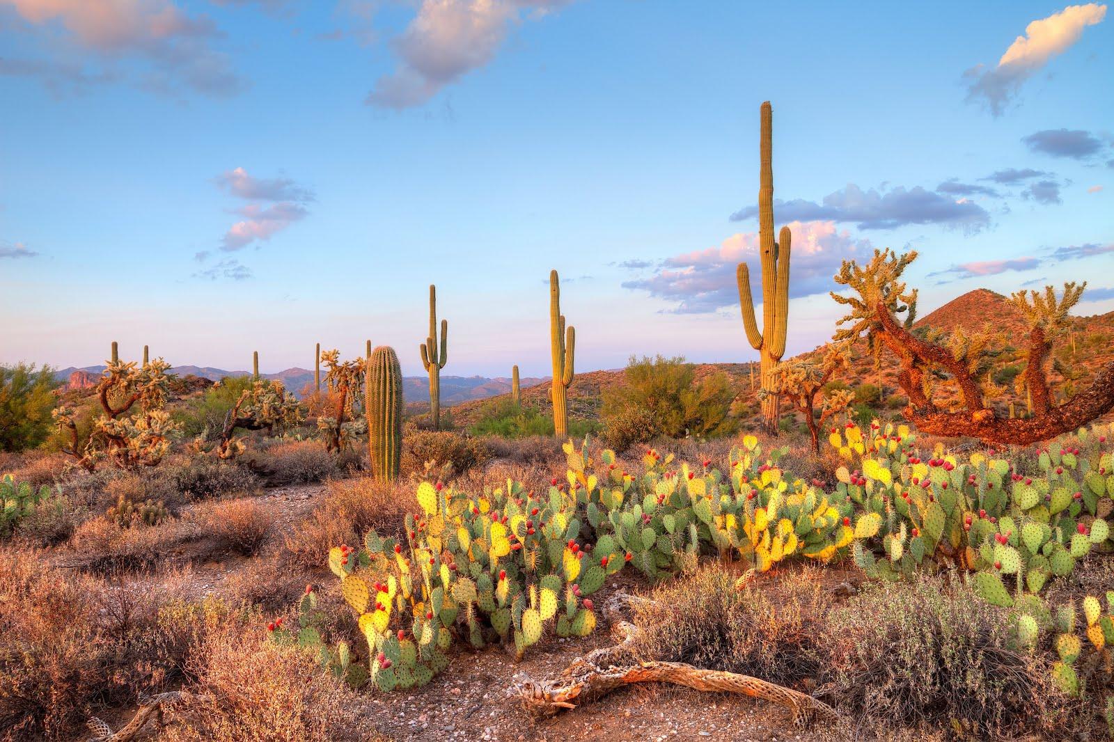 paisaje-desierto-de-sonora-mexico-cactus-nopales